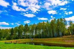 Белые облака над лесом стоковые изображения