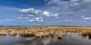 Белые облака над поднятым болотом трясин стоковое изображение rf