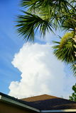 Белые облако и дерево Стоковая Фотография RF