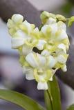 Белые орхидеи. Стоковые Фотографии RF