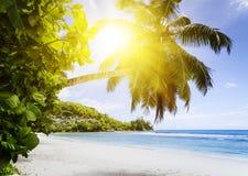 Белые песок пляжа коралла и Индийский океан просини. Стоковая Фотография RF