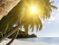 Белые песок пляжа коралла и Индийский океан просини. Стоковые Фотографии RF