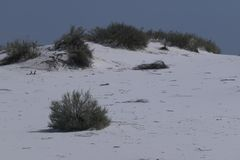 Белые песчанные дюны в Неш-Мексико стоковая фотография