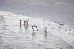 Белые птицы на пляже стоковые изображения