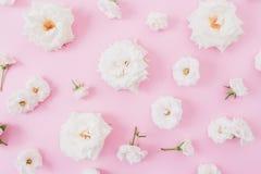 Белые розы и бутоны на розовой предпосылке Плоское положение, взгляд сверху абстрактная пастель изображения фрактали предпосылки Стоковые Фото