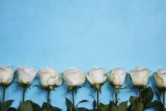 Белые розы расположенные в линии на голубой предпосылке Стоковые Фото
