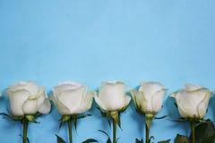 Белые розы расположенные в линии на голубой предпосылке Стоковое Изображение