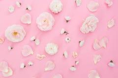 Белые розы цветочного узора белые на розовой предпосылке Плоское положение, взгляд сверху абстрактная пастель изображения фрактал Стоковые Фотографии RF