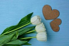 Белые тюльпаны и 2 коричневых сердца на голубой предпосылке Стоковые Изображения RF