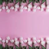 Белые тюльпаны цветут над светом - розовой предпосылкой Поздравительная открытка или приглашение свадьбы стоковая фотография