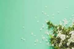 Белые хворостины вишневого цвета лежа на предпосылке бумаги мяты скопируйте космос стоковые фото
