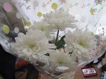 Белые хризантемы Стоковые Фотографии RF
