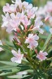 Белые цветки в крупном плане лета стоковые изображения