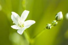 Белые цветки в лете Стоковое Изображение