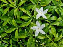 Белые цветки в саде стоковое фото rf
