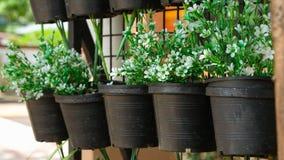 Белые цветки в черных пластичных цветочных горшках стоковые фотографии rf