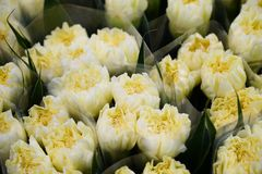 Белые цветки гвоздики совсем вокруг стоковые изображения rf