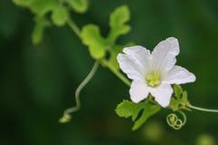 Белые цветки, зеленый цвет выходят на темноту ый-зелен Стоковое фото RF