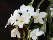 Белые цветки и зеленые растения стоковые фотографии rf