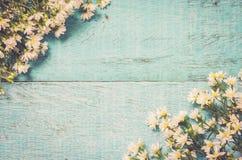 Белые цветки на голубой деревянной предпосылке Праздничная поздравительная открытка t Стоковые Фотографии RF