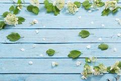 Белые цветки на голубой деревянной предпосылке Стоковое фото RF