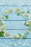 Белые цветки на голубой деревянной предпосылке Стоковые Фотографии RF