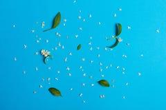 Белые цветки на голубой предпосылке Стоковое Изображение
