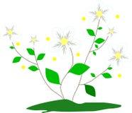 белые цветки с ветвями стоковые изображения
