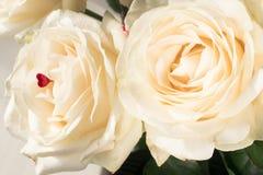белые чувствительные и красивые нежные розы, мягкий фокус Праздник женщин 8-ое марта Торжество подарок стоковая фотография rf