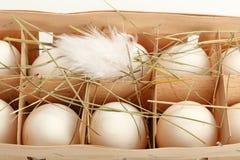 Белые яичка цыпленка в конце деревянного контейнера вверх Стоковая Фотография