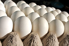 Белые яичка Стоковое фото RF
