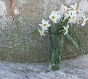 Белые daffodils в стекле на предпосылке серого бетона Стоковое Изображение