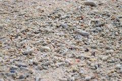 Белые Seashells и камни различных форм и размеров на пляже - естественной абстрактной предпосылке стоковое фото
