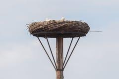 Белый аист сидя на гнезде стоковая фотография