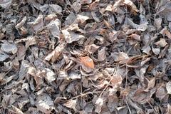 Белый высушите листья на том основании - предпосылка и текстурируйте Стоковые Изображения