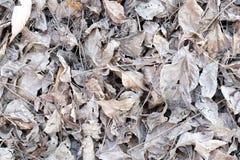 Белый высушите листья на том основании - предпосылка и текстурируйте Стоковое Изображение