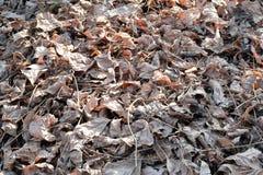 Белый высушите листья на том основании - предпосылка и текстурируйте Стоковая Фотография