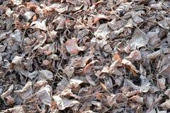 Белый высушите листья на том основании - предпосылка и текстурируйте Стоковые Изображения RF