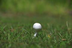 Белый гриб в траве стоковое фото