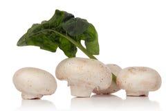 Белый гриб стоковая фотография