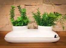 Белый декоративный керамический бак с 2 зелеными растениями стоковое изображение rf