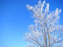 Белый деревянный контраст с предпосылкой голубого неба Стоковые Фотографии RF