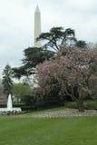 Белый Дом Lawn3 Стоковое фото RF