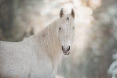Белый единорог в лесе зимы стоковое фото