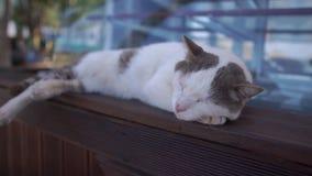 Белый запятнанный кот спать на деревянном шкафе около окна, замедленное движение видеоматериал