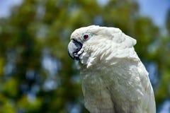 Белый зоопарк попугая, довольно, сера, дерево, попугай, уроженец стоковые фотографии rf
