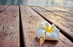 Белый и желтый plumeria цветет на старом деревянном поле Стоковая Фотография