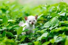 Белый котенок на заводе Стоковая Фотография RF