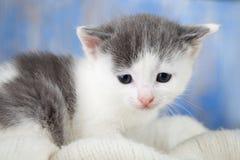 Белый котенок на конце-вверх одеяла удобном Стоковые Фото