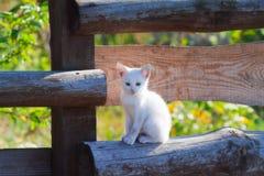 Белый котенок сидя на деревянной загородке Стоковые Фотографии RF